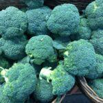 【農家直伝!】ブロッコリーのおいしい茹で方のすすめ